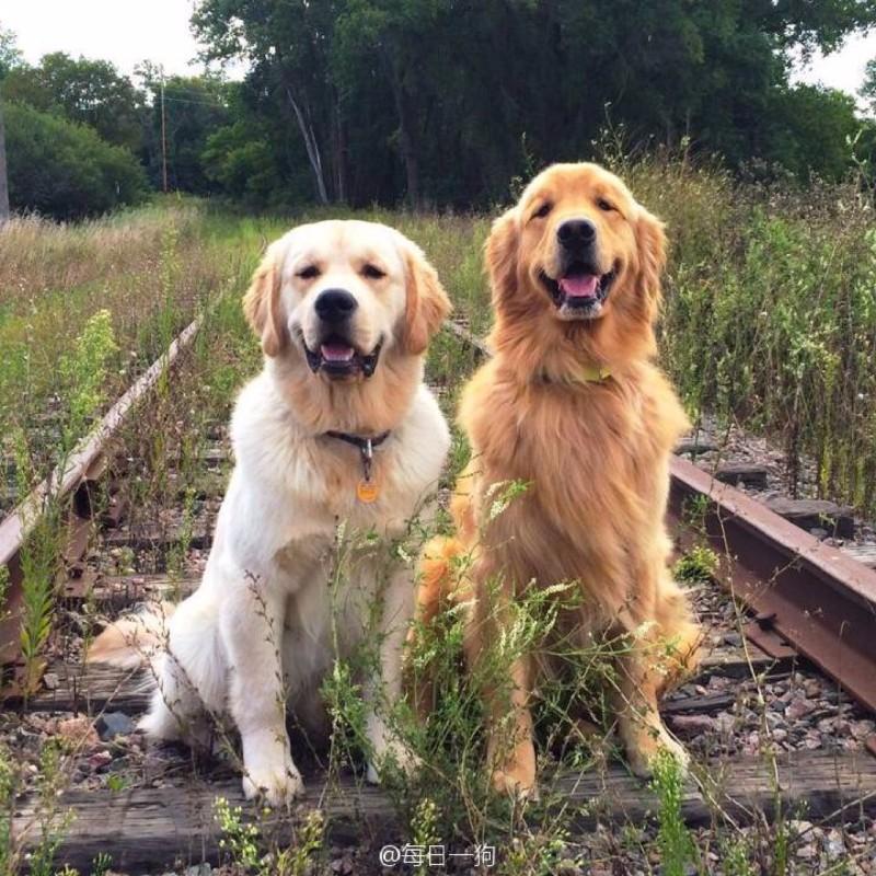 广州哪里有好多优质宠物狗幼犬 狗场本地出售