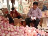 供应红富士苹果,陕西红富士苹果价格