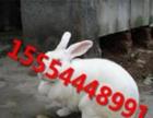 獭兔、新西兰白兔、加利福利亚兔、比利时兔、丹麦白兔、塞北兔