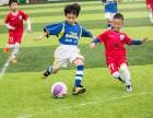 鸵鸟足球俱乐部,多年培训经验,高效的服务管理