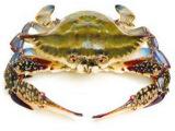 新鲜冰鲜鲜活野生梭子蟹 冰冻冷冻速冻海蟹螃蟹5kg装厂家直销批发