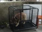 大狗笼 送安装工具