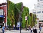 黄石植物墙 千山素集绿化墙 立体绿化室内生态氧吧