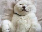 """这杯纯白的小奶猫""""咖啡""""要来一杯么?"""
