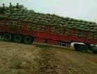酉阳县大件货运物流信息部公司调找回头车速度很快-专线直达