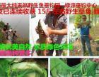 绿源垂钓中心--禹城最大纯天然野生鱼垂钓园