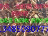 稻田如何养殖小龙虾龙虾苗价格现在龙虾苗多少钱一斤