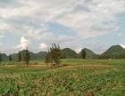 清远市450亩优质旱地