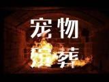 上海嘉定江桥镇宠物火化地址曹安公路宠物殡葬服务免费上门接送