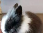 自家养殖场的宠物兔