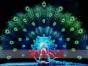 保定孔雀舞 草裙舞 爵士舞 芭蕾舞 街舞 激光舞LED荧光舞