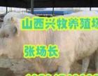 售育肥牛西门塔尔,夏洛莱,利木赞,黑白花肉牛