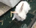 各种颜色,品种齐全,大小兔子出售