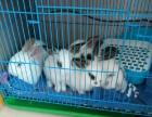 超级可爱超级萌的兔宝宝卖完