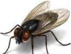 信阳上门杀虫灭鼠公司,为您消灭老鼠蟑螂营造舒适生活