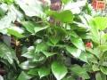 花木批发零售、花木租摆、园林设计、承包绿化工程。