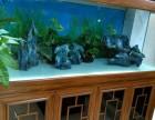 专业鱼缸清洗 造景 鱼缸器材配置 鱼病治