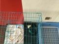 笼子和尿盆狗狗专用,便宜转让
