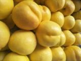青州黄珊瑚黄金油桃种植_要买黄珊瑚黄金油桃就到友科果树苗木
