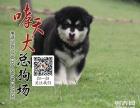 唯一一家经过犬业协会确认犬舍 阿拉斯加可签订协议z