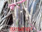 花椒苗桃树苗梨树苗核桃苗蓝莓苗批发种植基地