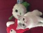 个人出售多只小加菲猫
