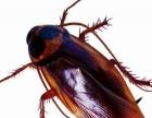 连云港专业灭蟑螂,老鼠蚊蝇等害虫