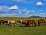 这个夏天我在呼伦贝尔大草原等你 忠山旅游车队