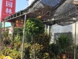 珠海绿植花卉租摆300元每月起,专业实惠