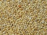 批发鸟食谷子黍子麻子鹩哥鸟食系列
