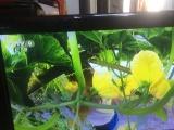康佳32电视机 图像鲜艳 带高清端口