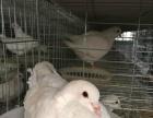 鹤壁鸽场 找周边养鸽合作伙伴 无需养殖经验