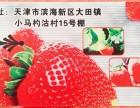 长和草莓采摘园15号棚