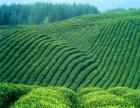 圣木茶叶 圣木茶叶加盟招商