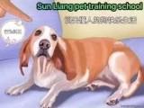鄭州訓犬師學校學習在哪里寵物老師培訓基地在哪全國