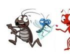西安灭蟑螂公司电话 灭蟑螂价格 专业灭蟑螂公司