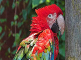 巴彦淖尔乌后旗本地出售观赏鸟种类繁多