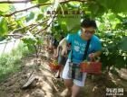 上海农家乐旅游 采葡萄摘桔子 钓鱼烧烤游海边