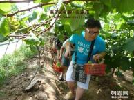 上海周边农家乐旅游 采葡萄摘西瓜 烧烤垂钓游海边