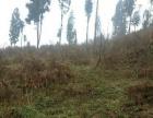 四川省阿坝州汶川县1100亩林地出租