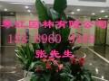深圳租花龙华最优惠租花花卉租赁园林绿化开业花篮