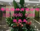 深圳办公室租花 绿植租摆后期维护需要做什么