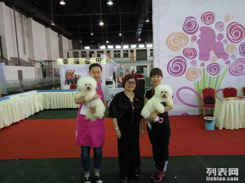 齐齐哈尔宠物美容学校