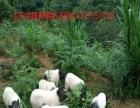 巴马香猪养殖技术培训班