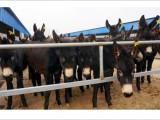 牛馬驢騾買賣代辦服務部