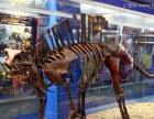 哪里有恐龙出租 恐龙展览出租 侏罗纪仿真恐龙出租出