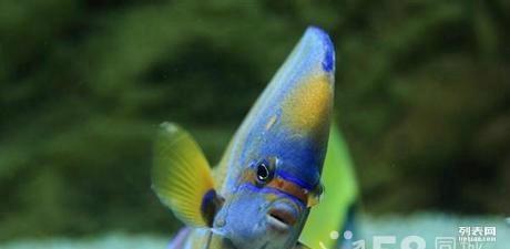 今天算是吃得最多的一天了 北京观赏鱼 北京龙鱼第2张