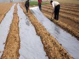 烟草种植地膜厂家|桂林国科农资供应安全的烟草种植地膜