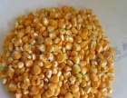 大型饲料厂 养殖场设备 脱皮机 玉米脱皮 大麦脱壳