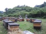 蜂蜜活动大酬宾,价钱低,赠品多,欢迎访问蜂窝窝蜂蜜